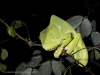 Mike Bray Photography - Chameleon