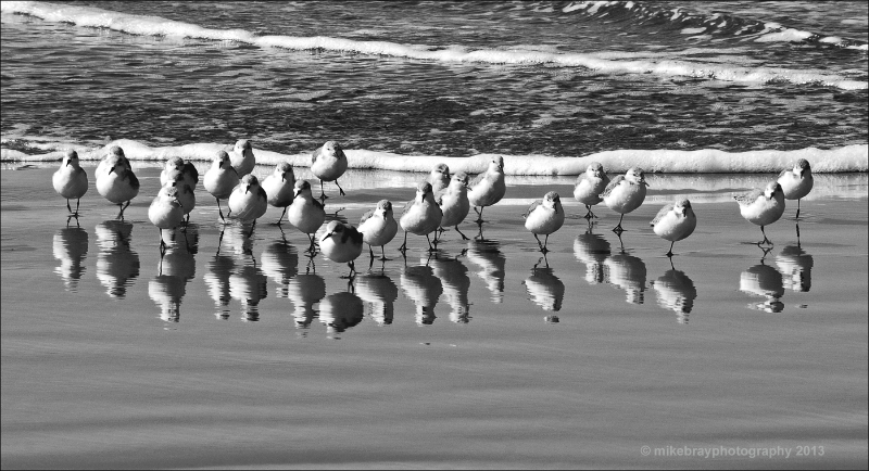 shorebirds-2